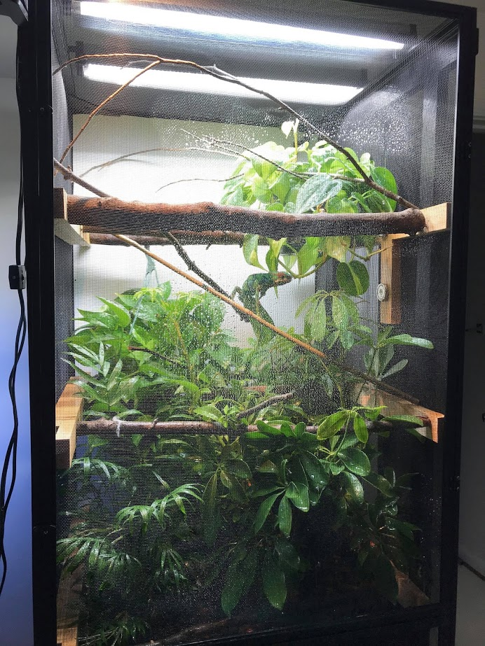 Housing: Furcifer pardalis (Panther Chameleons)